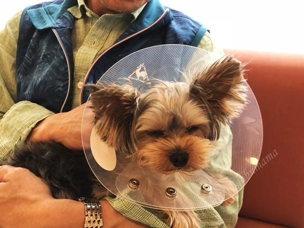 犬 去勢手術後