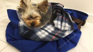 犬 去勢手術