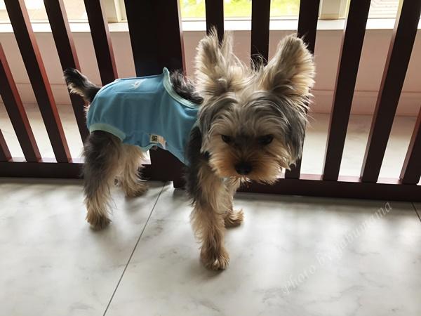エリザベスウェア 犬