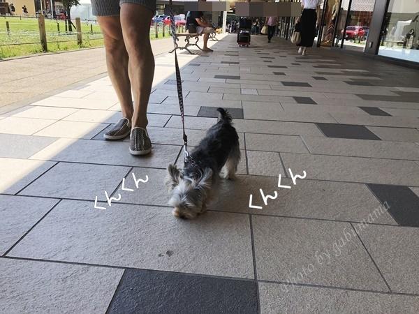 軽井沢アウトレット 犬