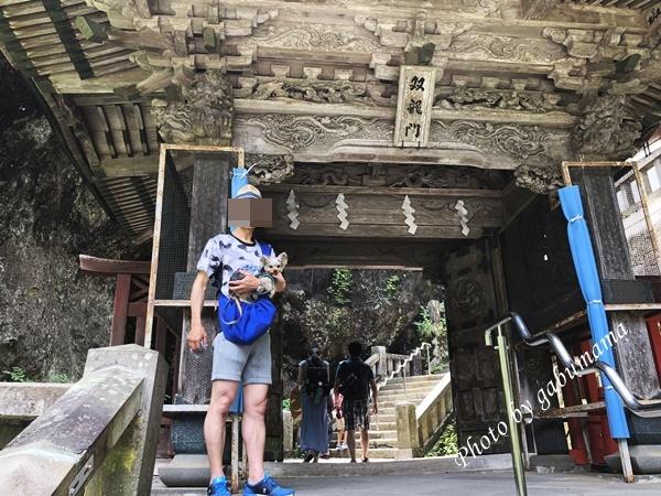 榛名神社 犬
