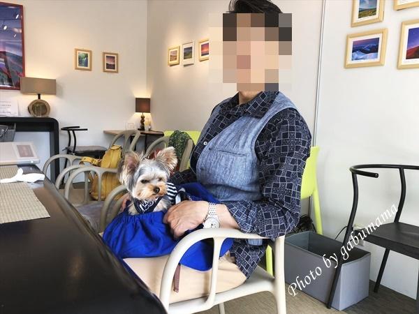 軽井沢 カフェ 犬連れ
