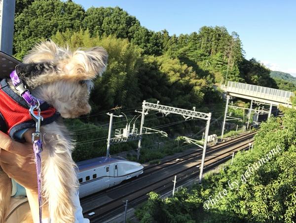 北陸新幹線 撮り鉄