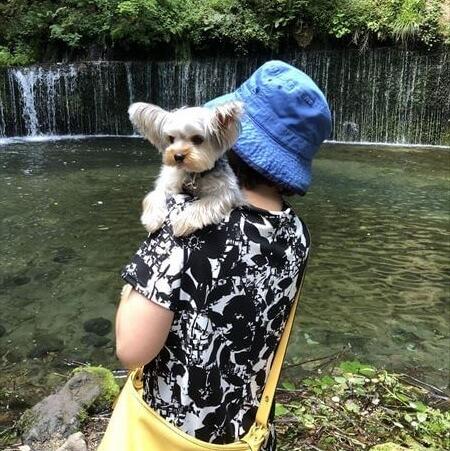 軽井沢 白糸の滝 犬