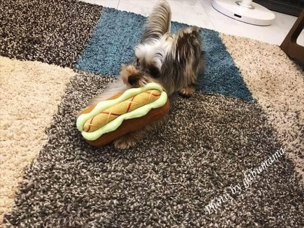 犬 ホットドッグ