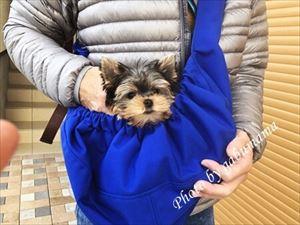 犬 スリング(抱きバッグ)